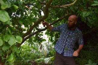 Jörgen och plommonträdet