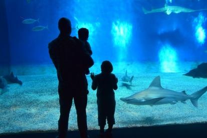 Familjen spanar på hajar