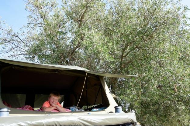 talt-under-olivtrad