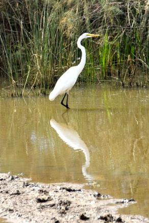 Reservatet känt för sitt rika fågelliv