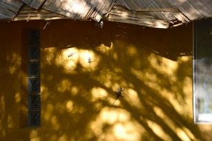 Ödlor. foto av Harald