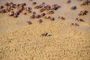 Krabbor. Foto av Harald