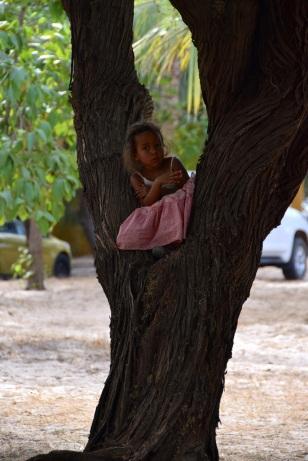 Söker skugga i ett träd