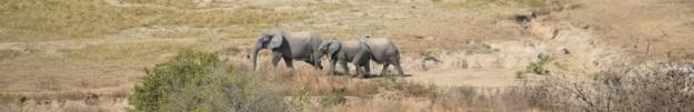 elefantutsikt