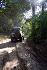 hjulspar-guinea