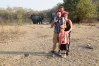 morgonpromenad-elefanter