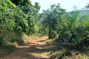 Vägen blir äntligen bred. Detta är N3 i Guinea.