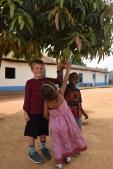 Barnen kollar in mangoträdet
