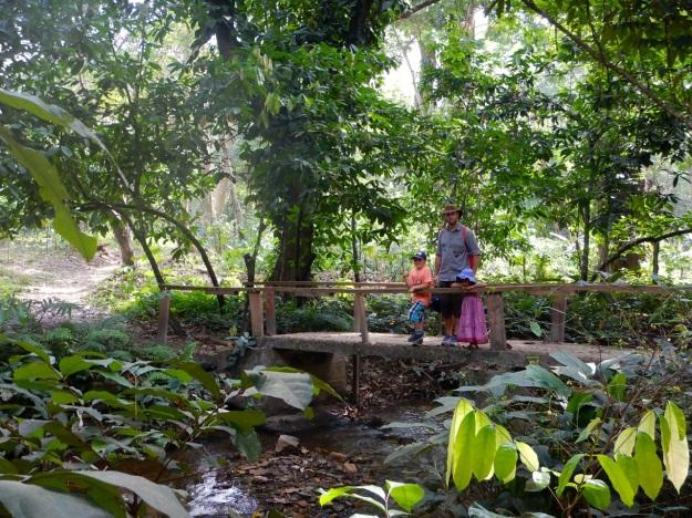 wli-djungel