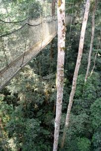 Canopy walk2