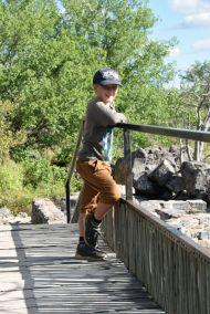 Harald spanar djur
