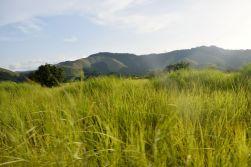 Gröna kullar och långt gräs