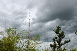mera regnmoln