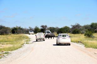 noshörning över vägen