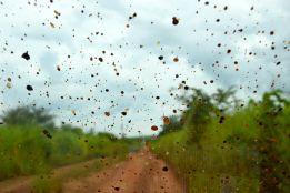 Regn i Kongo