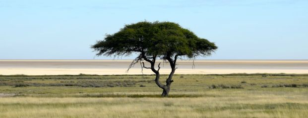 Träd Etosha