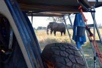 elefant bakom bilen