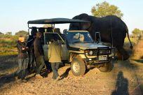 elefant går genom vårt läger