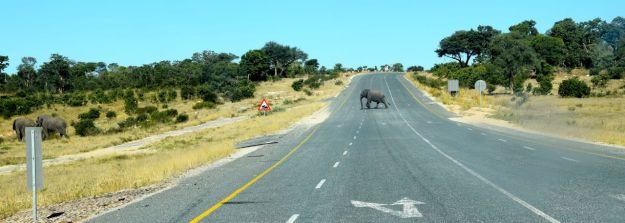 elefanter i Botswana