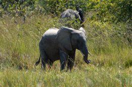 Kafua elefant