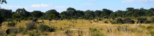 många elefnter i Hwange NP