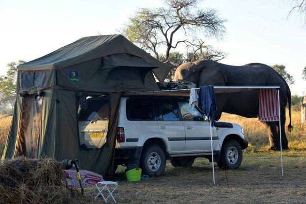 Mike och Jens bil med elefantbesök
