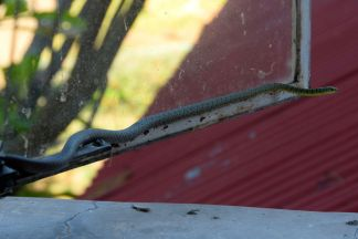 orm i fönster