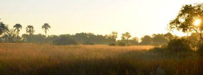 okavangodeltat i morgonljus